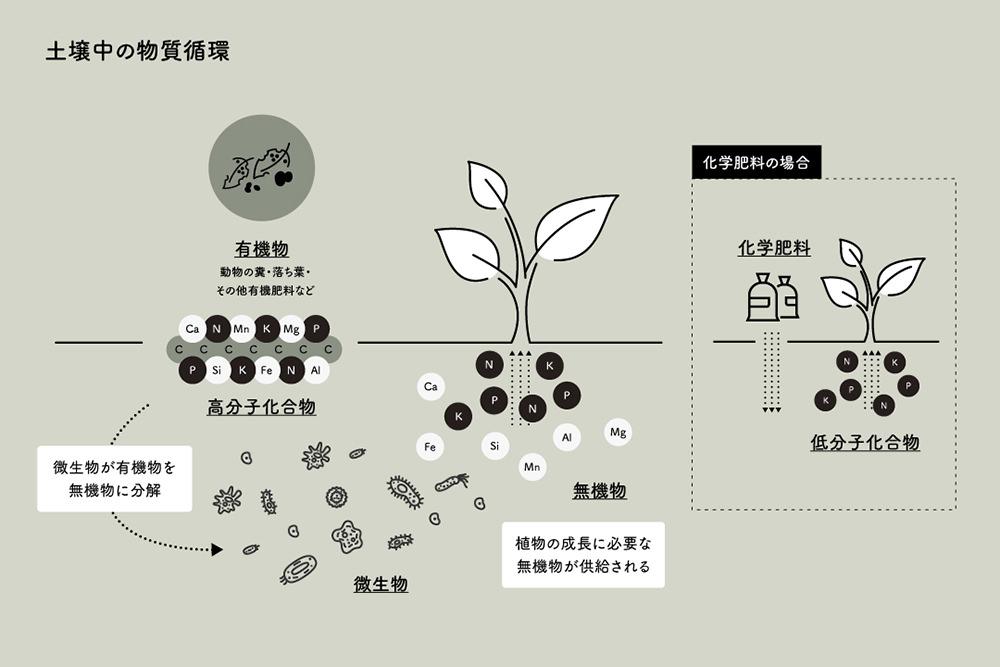土壌中の物質循環と微生物の働きを示す図