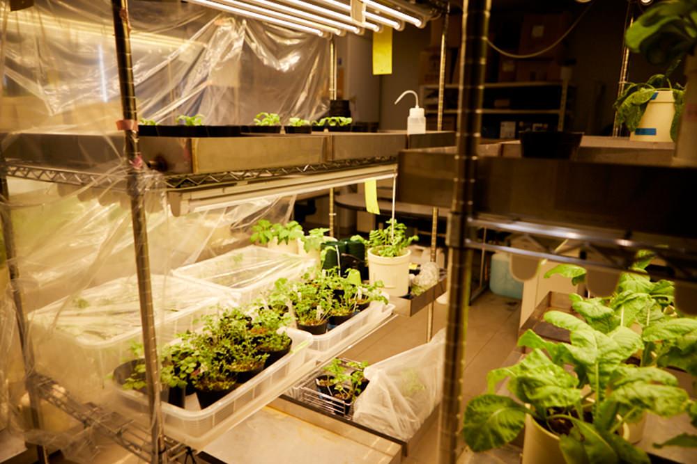 立命館大学内にある植物工場の様子
