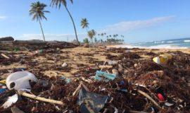マイストローで海洋プラスチックは減る? 容器包装プラ削減への発展がカギ